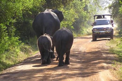 Srí Lanka sloni na safari