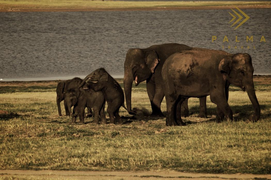 Poznávací zájezdy na Srí Lance