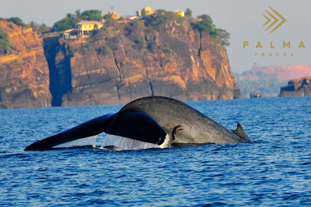 Srí Lanka - Trincomalee a Passikudah
