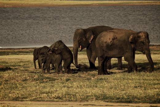 Srí Lanka - Poznávací zájezdy na Srí Lance