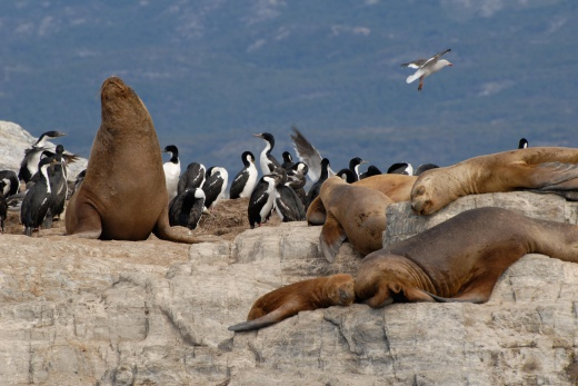 Argentina - Puerto Madryn