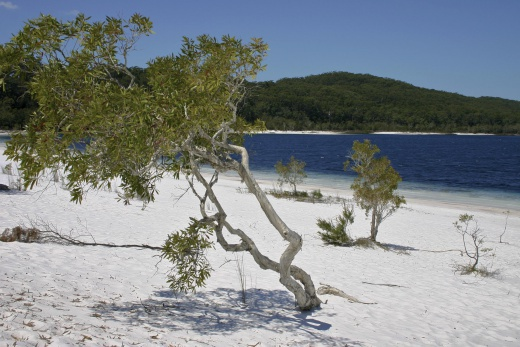 Austrálie - Brisbane, Gold Coast a Fraser Island