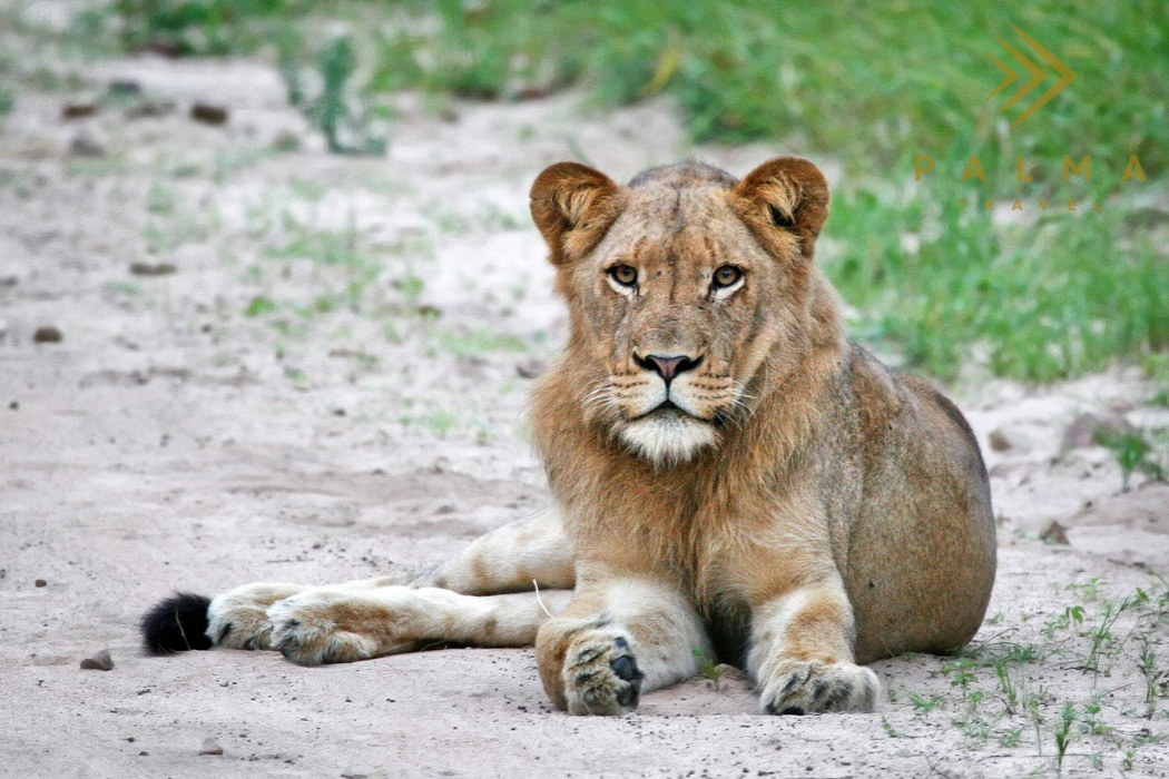 12 denní Safari balíček + poznávání JAR/ 9 nocí