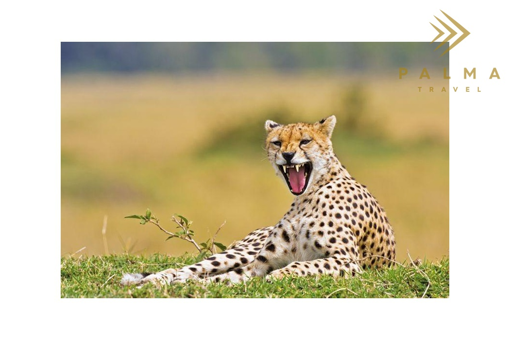 Safari Ruaha