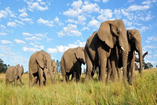Slonní park