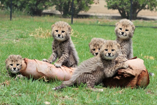 Park divokých zvířat Cango
