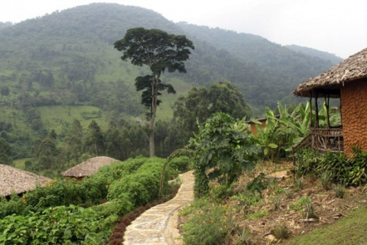 Uganda - pozorování goril + krásy Tanzanie - Tarangire - Lake Manyara - Serengeti