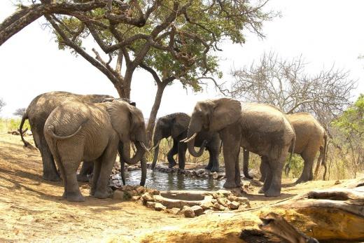 Elevana Sky Safari - Arusha, Tarangire, Karatu, Serengeti