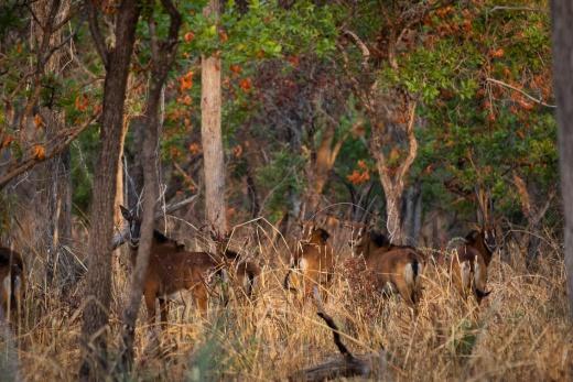 Západní Tanzánie - národní park Katavi, národní park Mahale Mountain