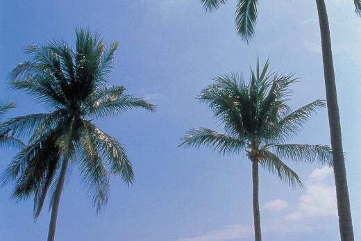 Pelangi Beach Resort pláž 1