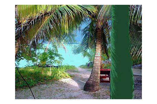 Fafa Island Resort zahrada