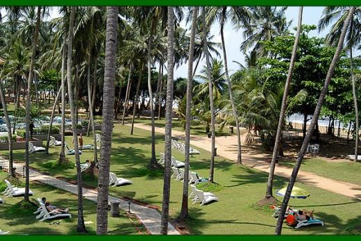 Royal Palms zahrada