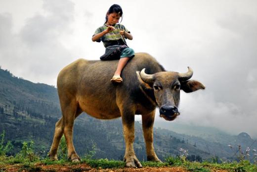 Vietnam blízký i vzdálený