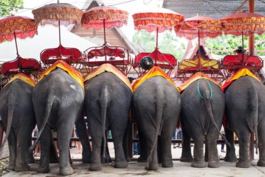 Za exotikou jihovýchodní Asie