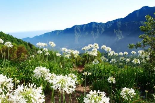 Ostrov květů a vůní Madeira