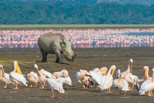 Příroda východní Afriky