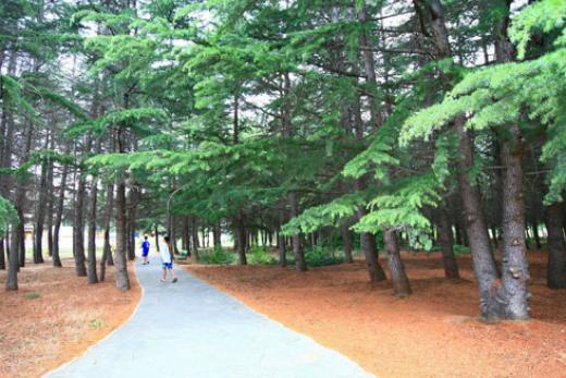 Park Continental Part 3*