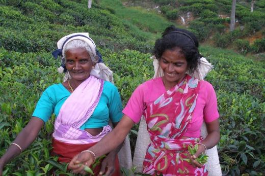 Klasický  okruh Srí Lankou a pobyt u moře 3 *