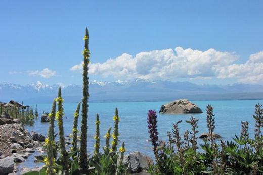 Jižní ostrov jezero Tekapo