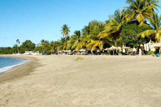 Starfish Tobago Tobago