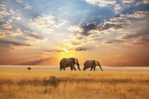 Safari - Sloni V Soumraku