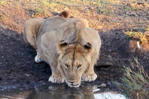 Safari - Magická Masai Mara
