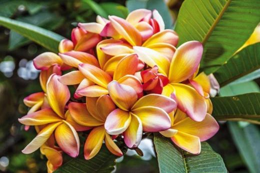 Za Vůní Ostrova a Barvami Květin