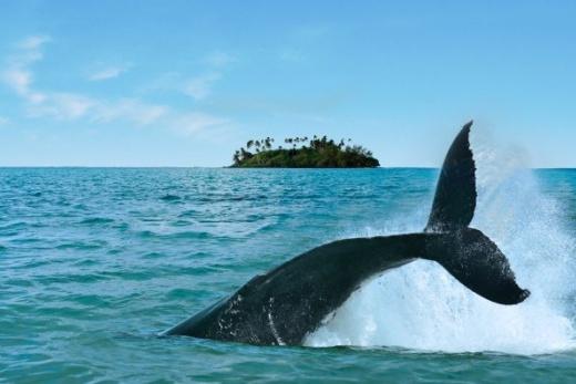 Cookovy ostrovy Poznávací zájezd