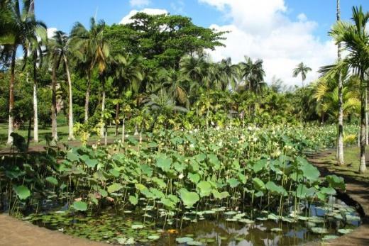 Perly Indického oceánu Kombinace ostrovů Reunion a Mauritius