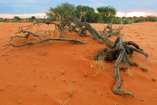 Fascinující Namíbie